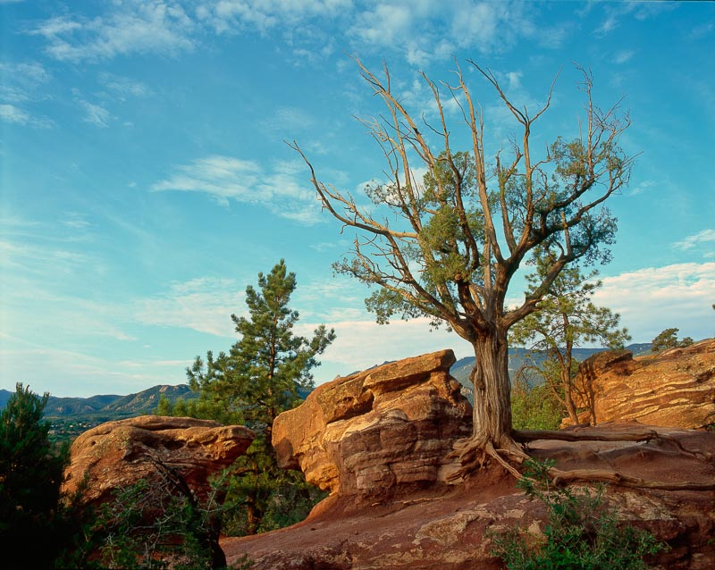 Trees in Garden of the Gods Colorado Springs, CO