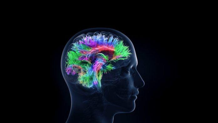 3D brain activity International Brain Initiative
