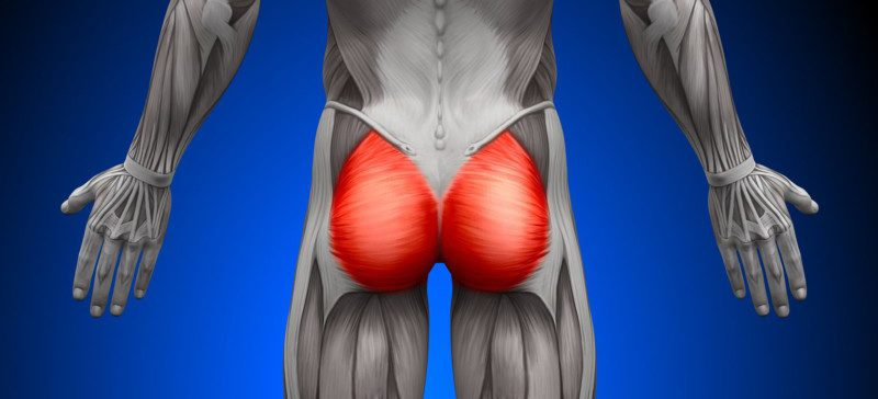 gluteus muscles diagram pain house lighting wiring the difference between tailbone bruises & fractures | back surgeon