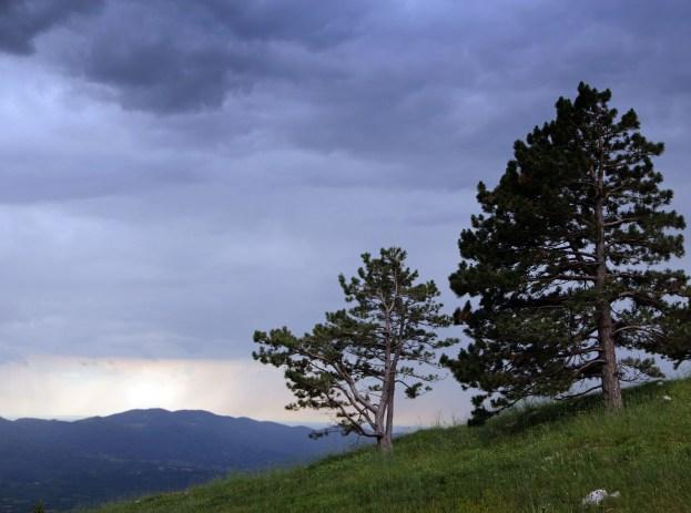 random pines