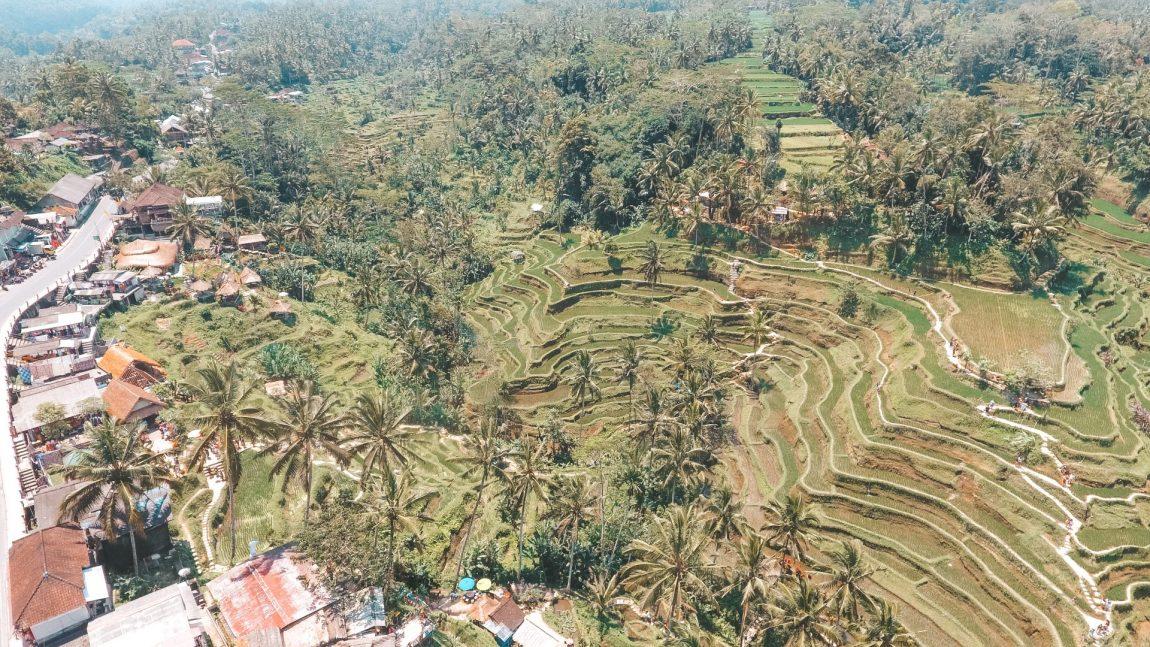 Los arrozales Tegalalang y templos cercanos