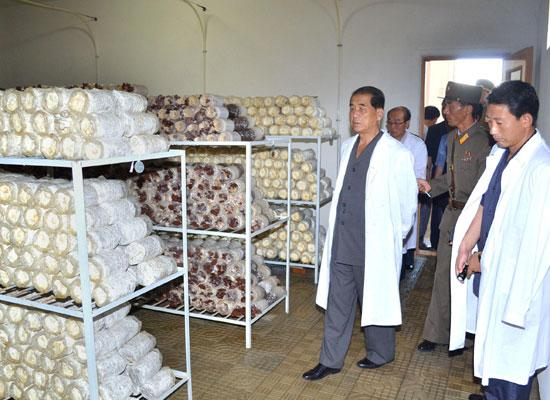 Pak Pong-ju visits some mushroom growing factories. | Image: Rodong Sinmun