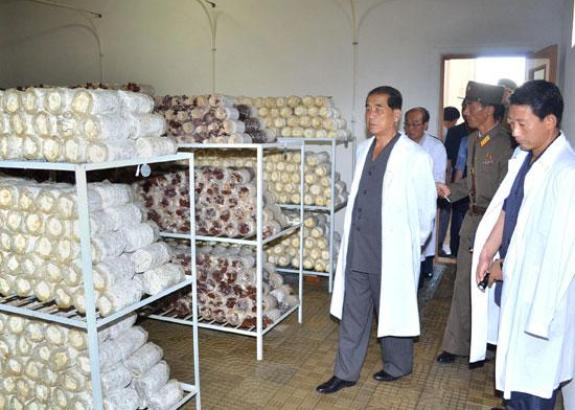 Pak Pong-ju visits some mushroom growing factories. | Image: Rodong Sinmun
