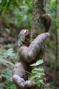 sloth-1081784_960_720