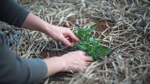Êtes-vous potier ou jardinier ?