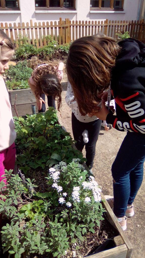 On trouve de tout dans les plantes... aussi des escargots !