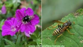 2014-06-03-bijen-soorten