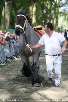2014-09-28-trekpaarden-04
