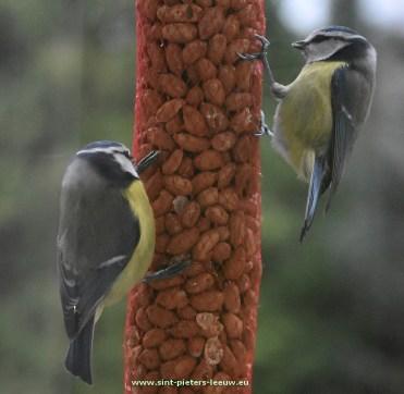 2017-01-07-vogels-voederen-winter_01