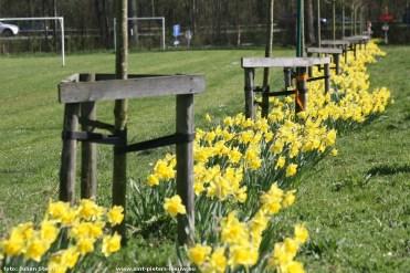 2017-04-01-paasbloemenpracht_in_Sint-Pieters_Leeuw_02