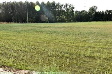 2018-07-31-droogte-nieuw-ingezaaid-veld_SK-Vlezenbeek_02