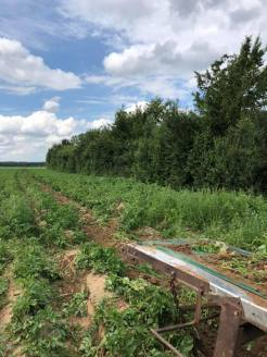 2019-09-07-hoeve-lemaire-aardappelen_03