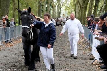 2019-09-29-trekpaardendag-Coloma_Sint-Pieters-Leeuw (2)