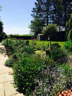 Herb garden and border after two years maturing