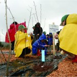 messa a dimora alberi | Sintesi Factory
