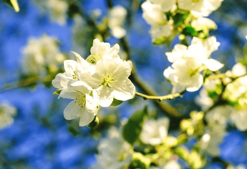 Good morning images of  white flowers