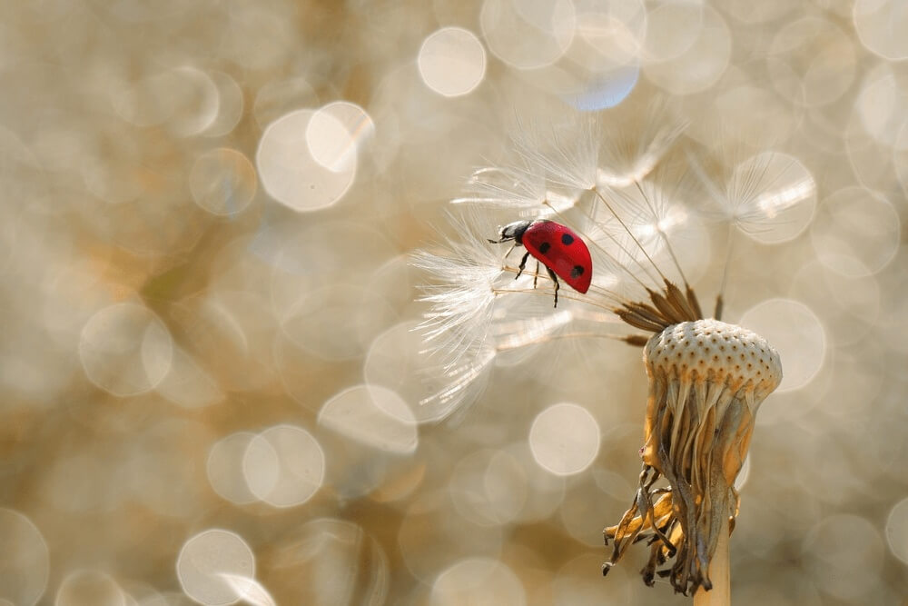 Good morning images with little red ladybug