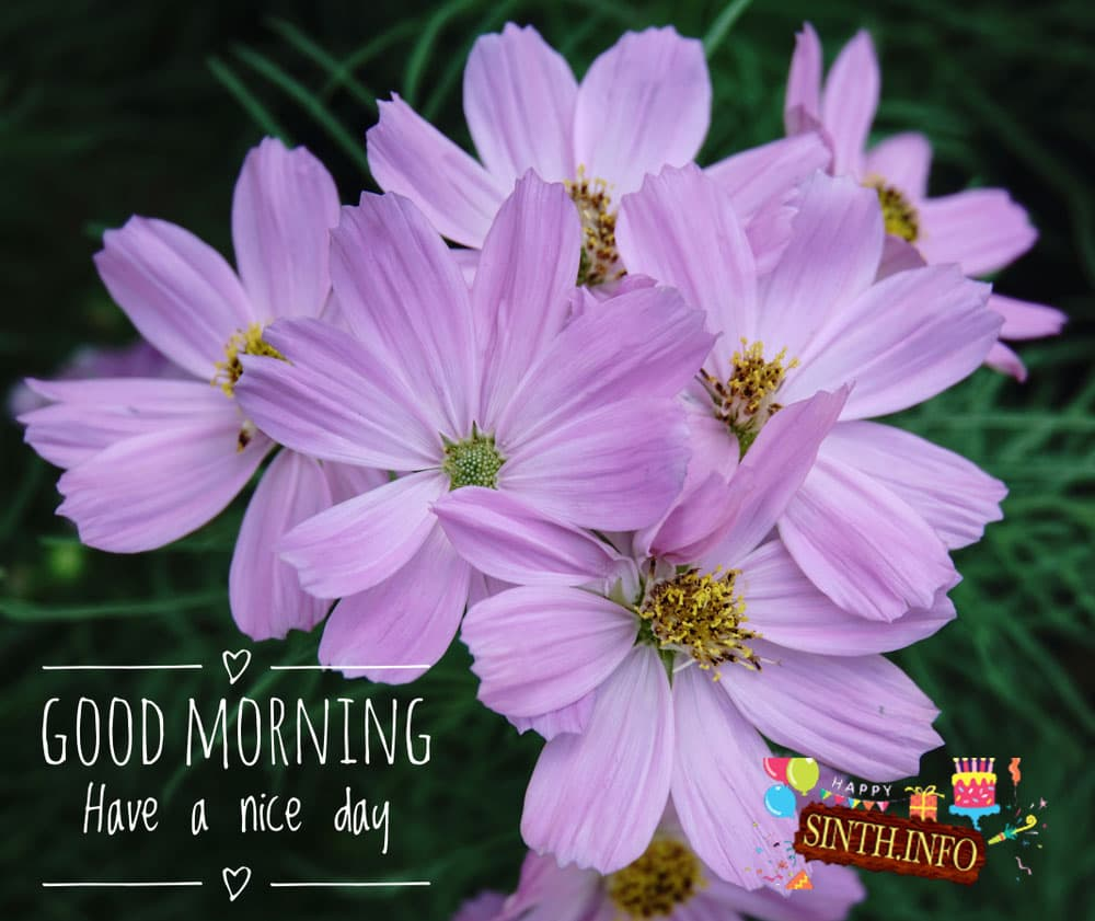 good morning tuesday disney images