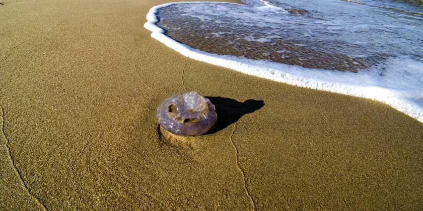 picadura de medusa complicaciones
