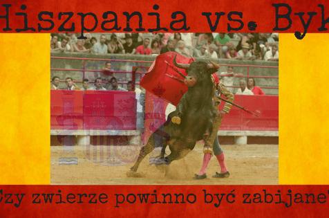 Hiszpania #1 – Byk – Wykorzystywanie zwierząt w turystyce