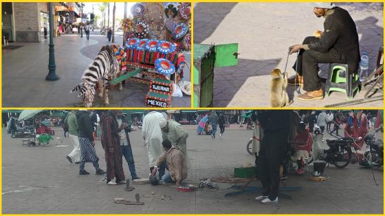 Świadome Podróżowanie Zarabianie na zwierzętach