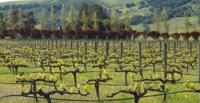 Wine Country GIVEAWAY Wednesday on #SonomaChat