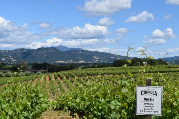 Top Ten Reasons To Visit Sonoma's Wine Country