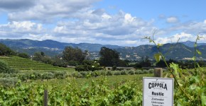 Great Wines & Fabulous Experiences – A Commitment to Sonoma County at Coppola Winery