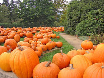 OCTOBER SCENTS ARE PUMPKIN READY