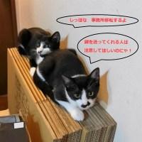 猫から移転お知らせ