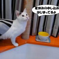 看板猫からお知らせ