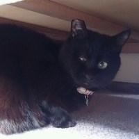 黒猫かしみちゃん