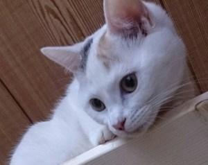 三毛猫の写真