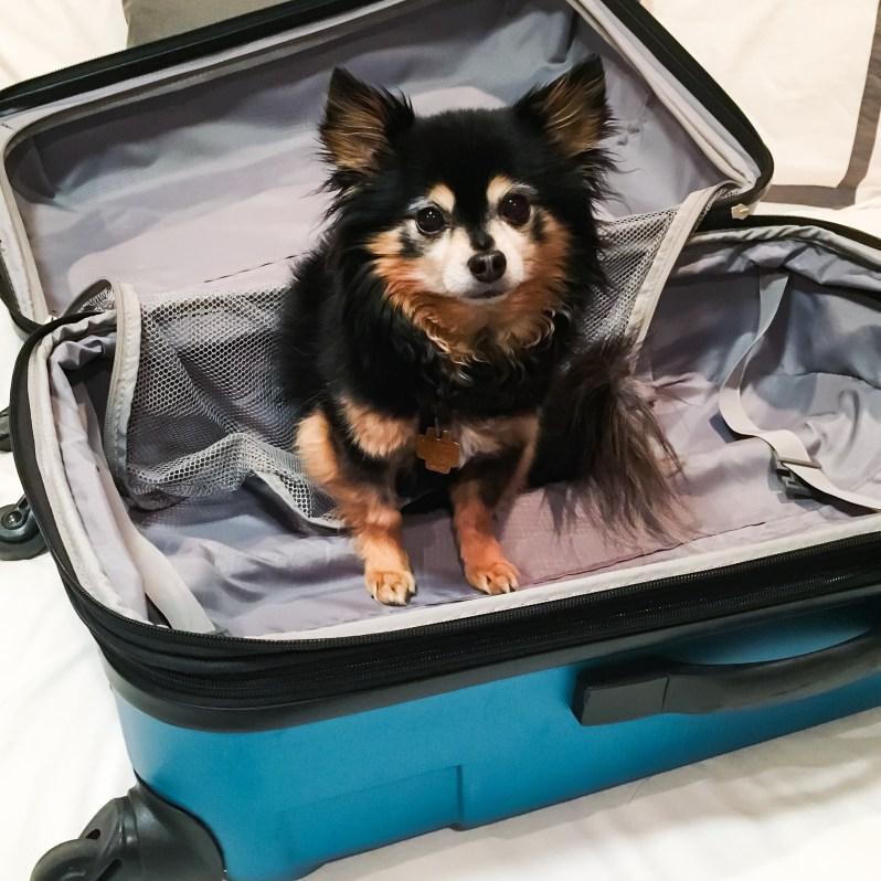 Samsonite Teal Luggage Hard Sided