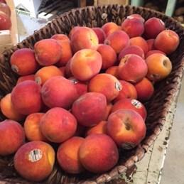 bulldegafruit