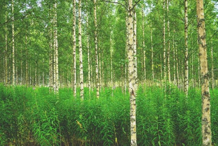 YVA-menettely tarkoittaa ympäristövaikutusten arviointia.