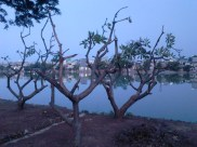 Pohon-pohon kering di tepi danau