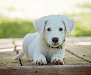 Are Essential oils bad for Dogs? | Dogs and Essential Oils