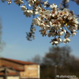 Venezia Mestre: primavera a Forte Marghera