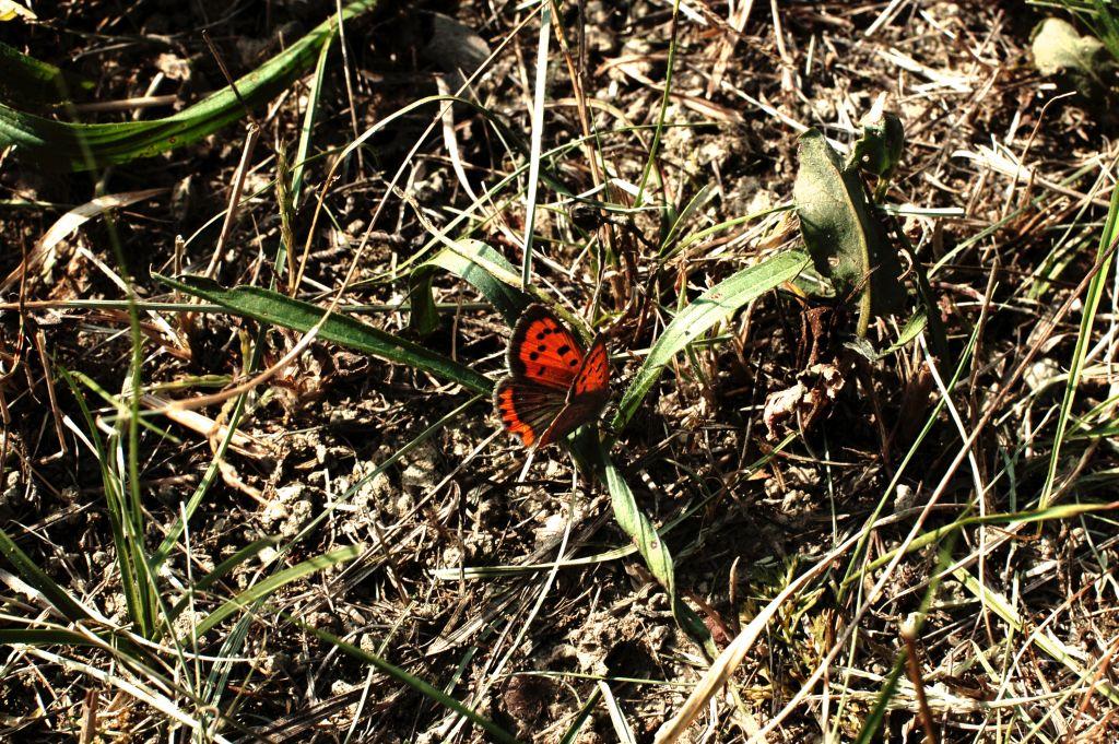 Bosco di Carpenedo - Mestre: Farfalla