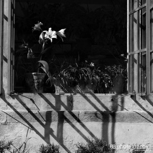 Stra: Villa Pisani Orangerie
