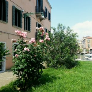 Venezia: San Pietro di Castello Rose