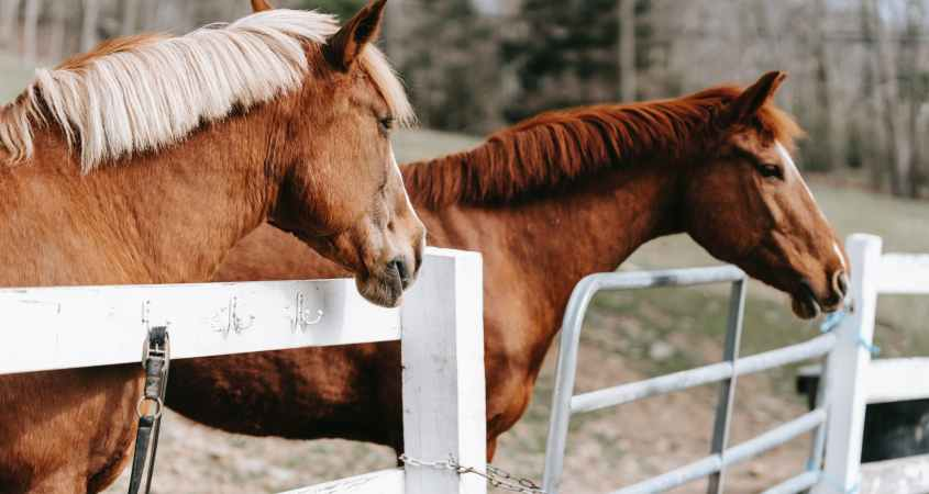 animal farm grass fence