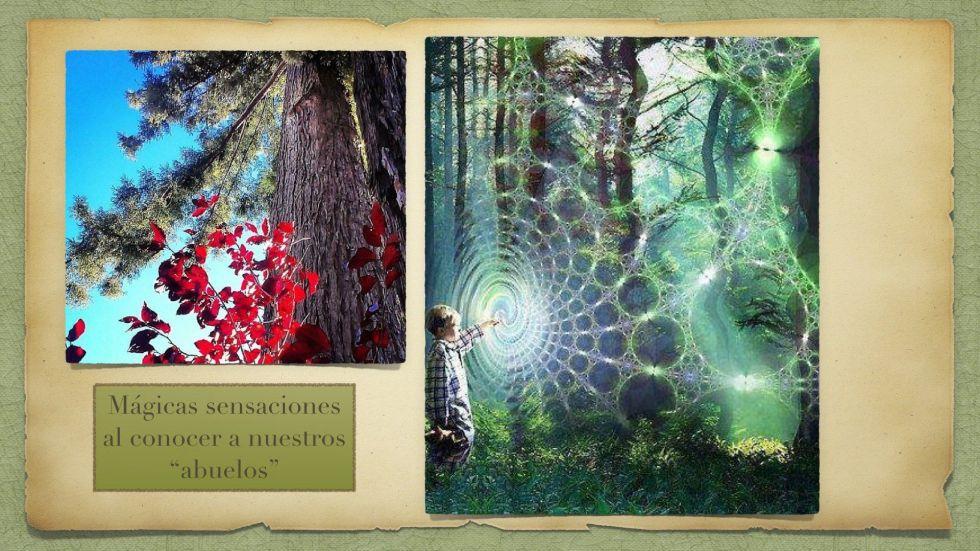 Nuestros abuelos, los milenarios redwoods
