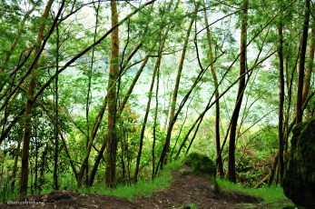 Pepohonan rindang