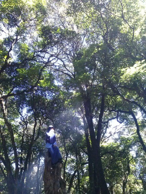 Ngerjain Neneng di atas pohon