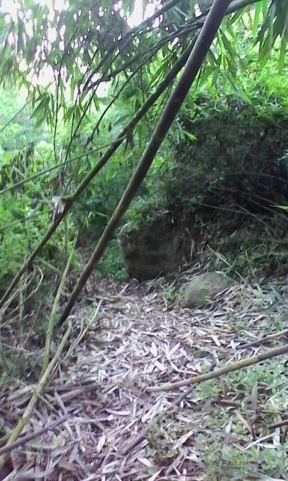 Jalur yang tertutup daun-daun bambu