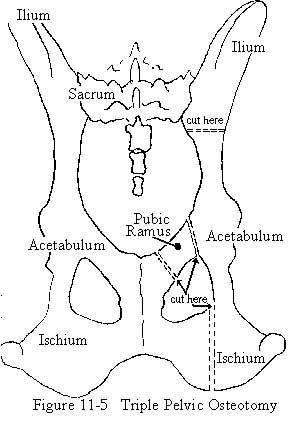 Canine Skeleton Diagram, Canine, Free Engine Image For