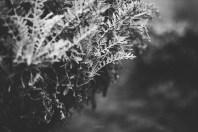 untitled-8300-Edit