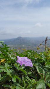 Flower & Mountain